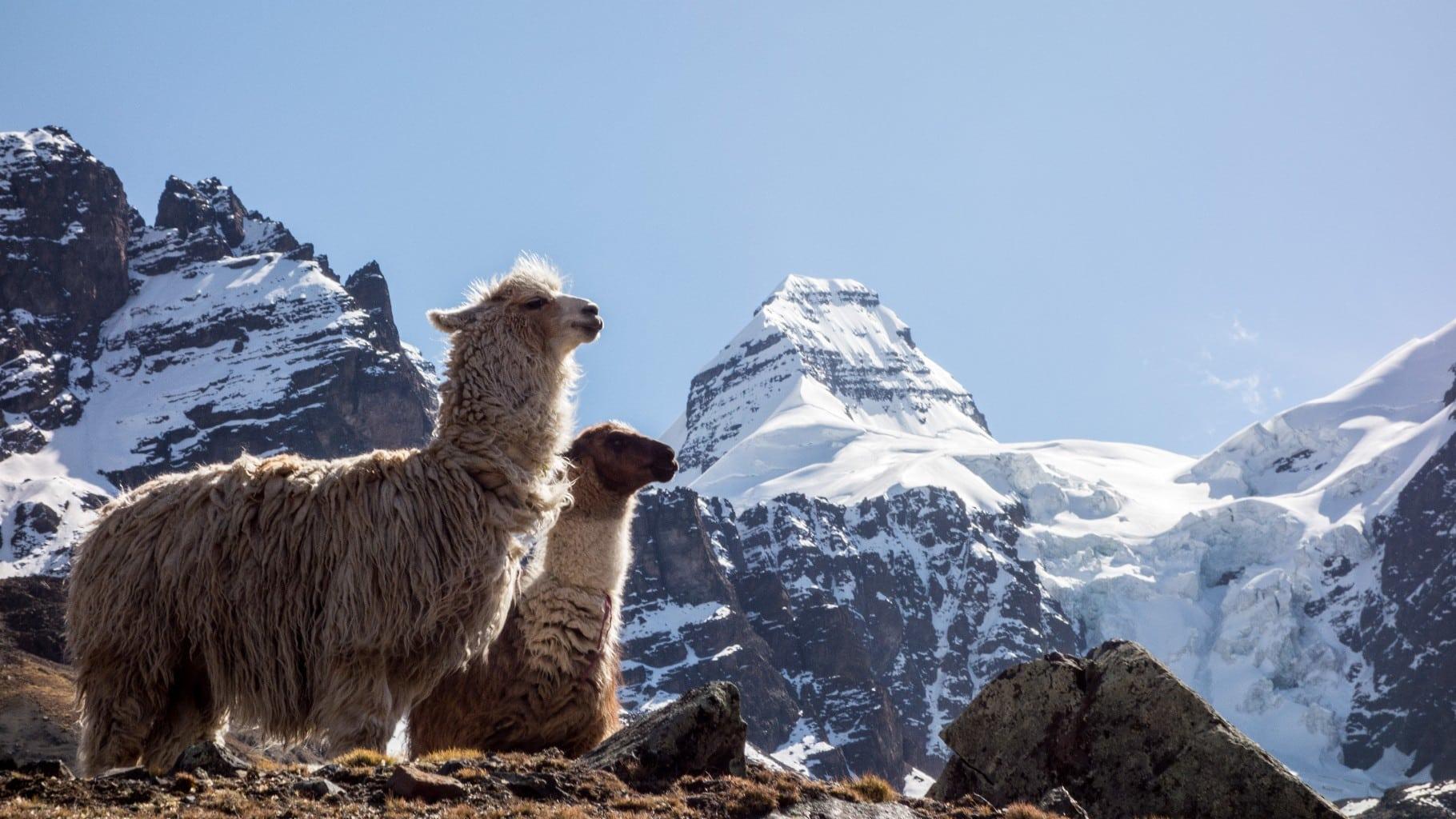 Condoriri 5-day climbing expedition