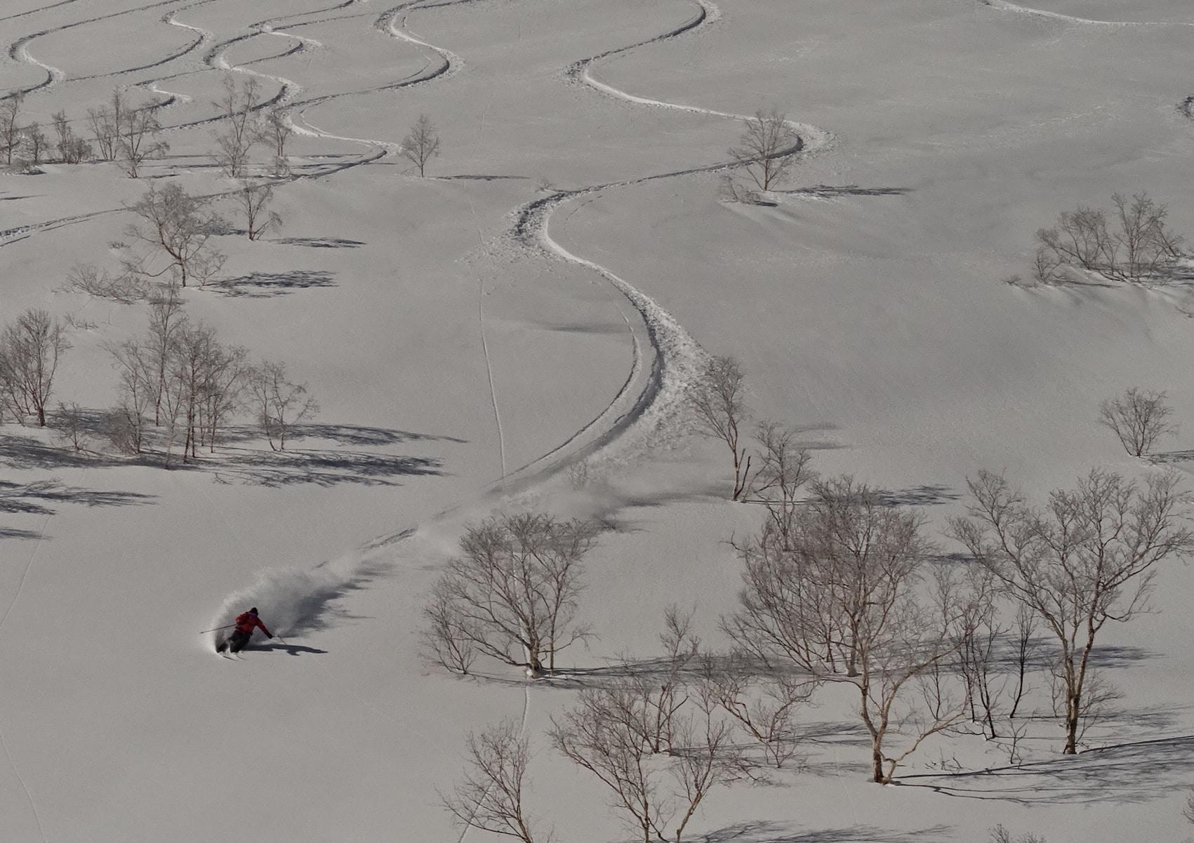 Hokkaido Powder Hunting