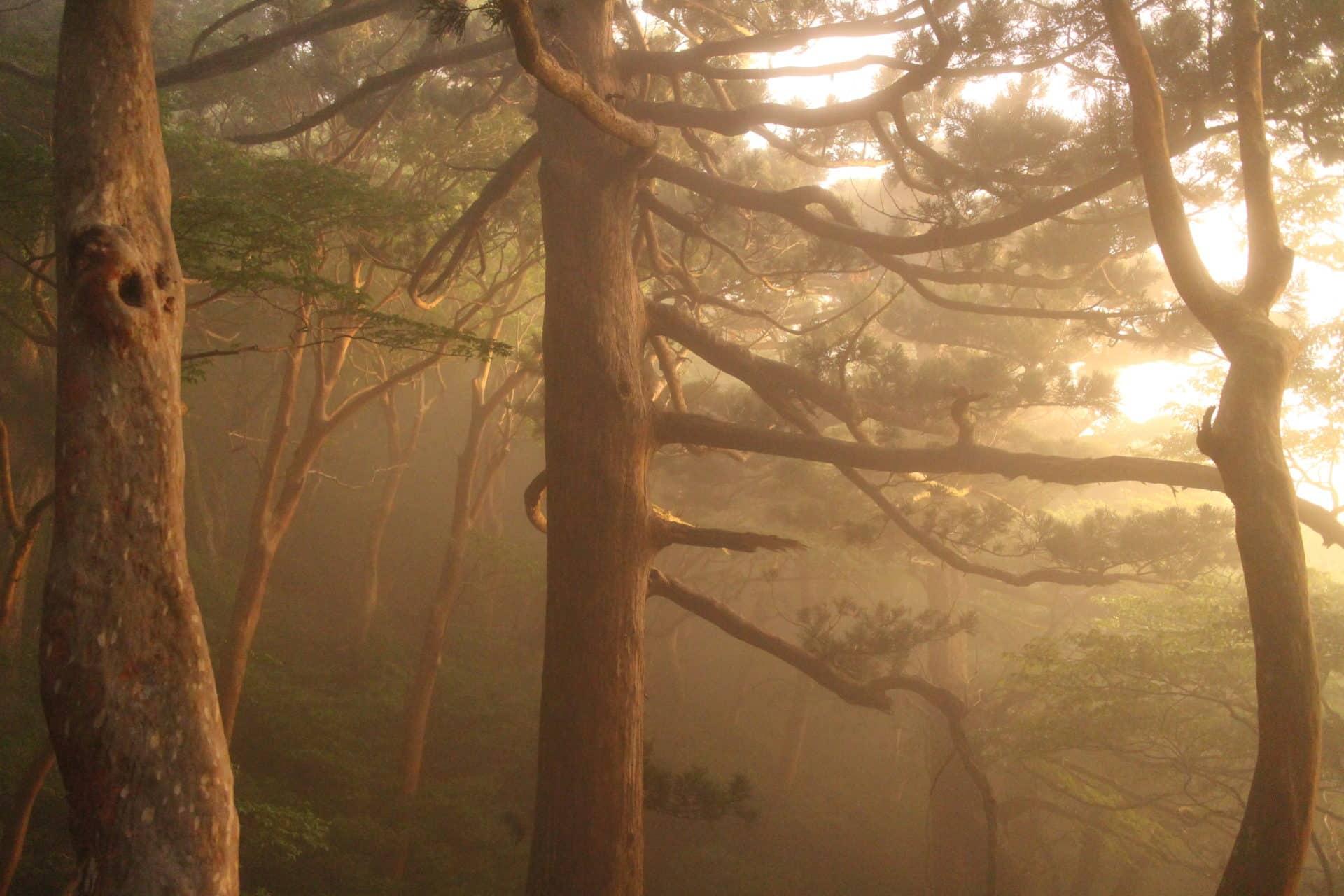 2 Day Jomon-Sugi Trekking Tour, Yakushima