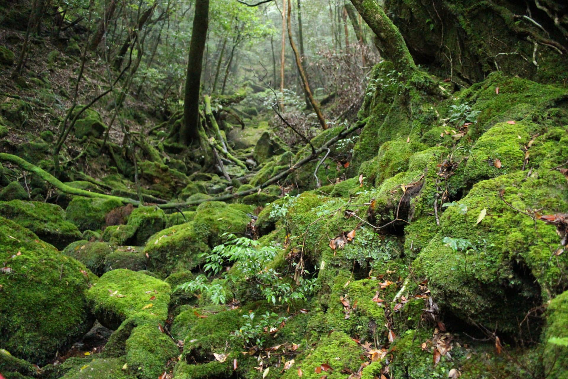 1 Day Shiratani-Unsuikyo Trekking Tour, Yakushima (private)