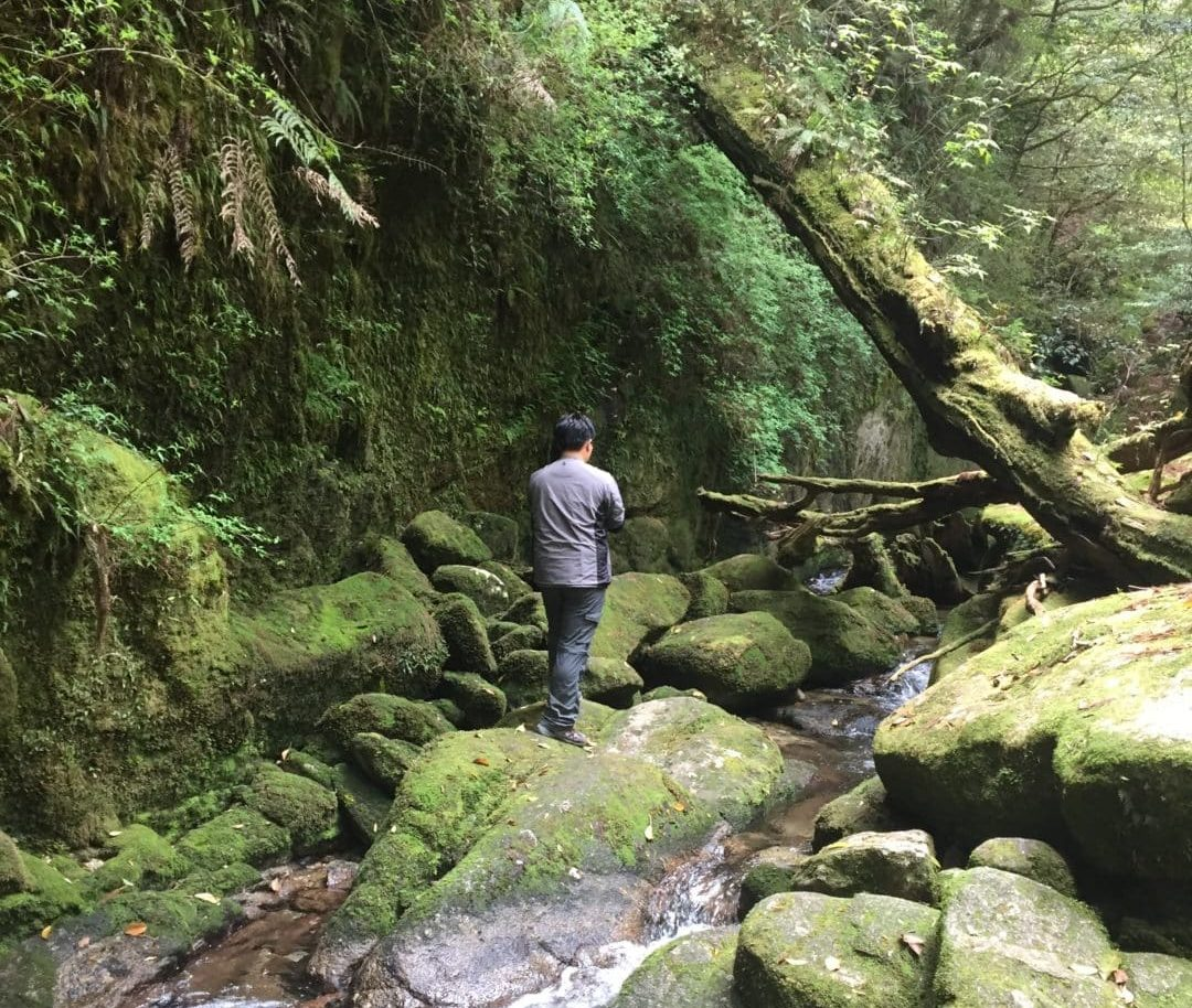 1-Day Trek Shiratani Unsuikyo Forest, Yakushima