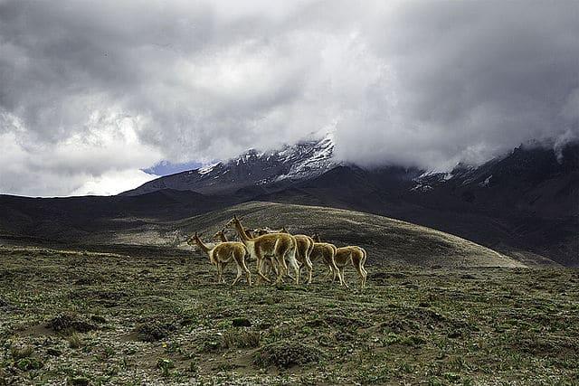 Chimborazo Fauna Reserve guided trekking tour