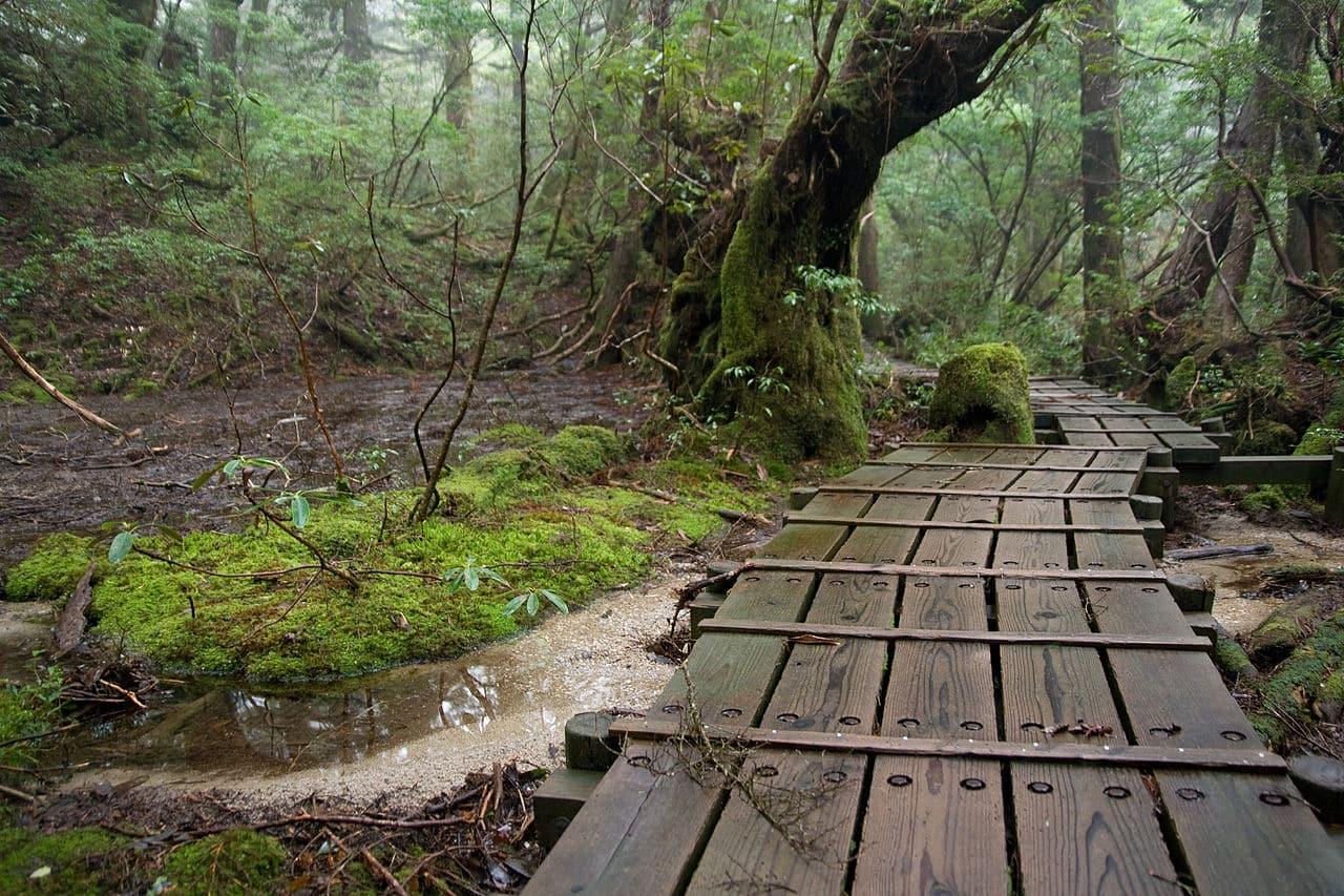 2-day hiking trip in Yakushima Island