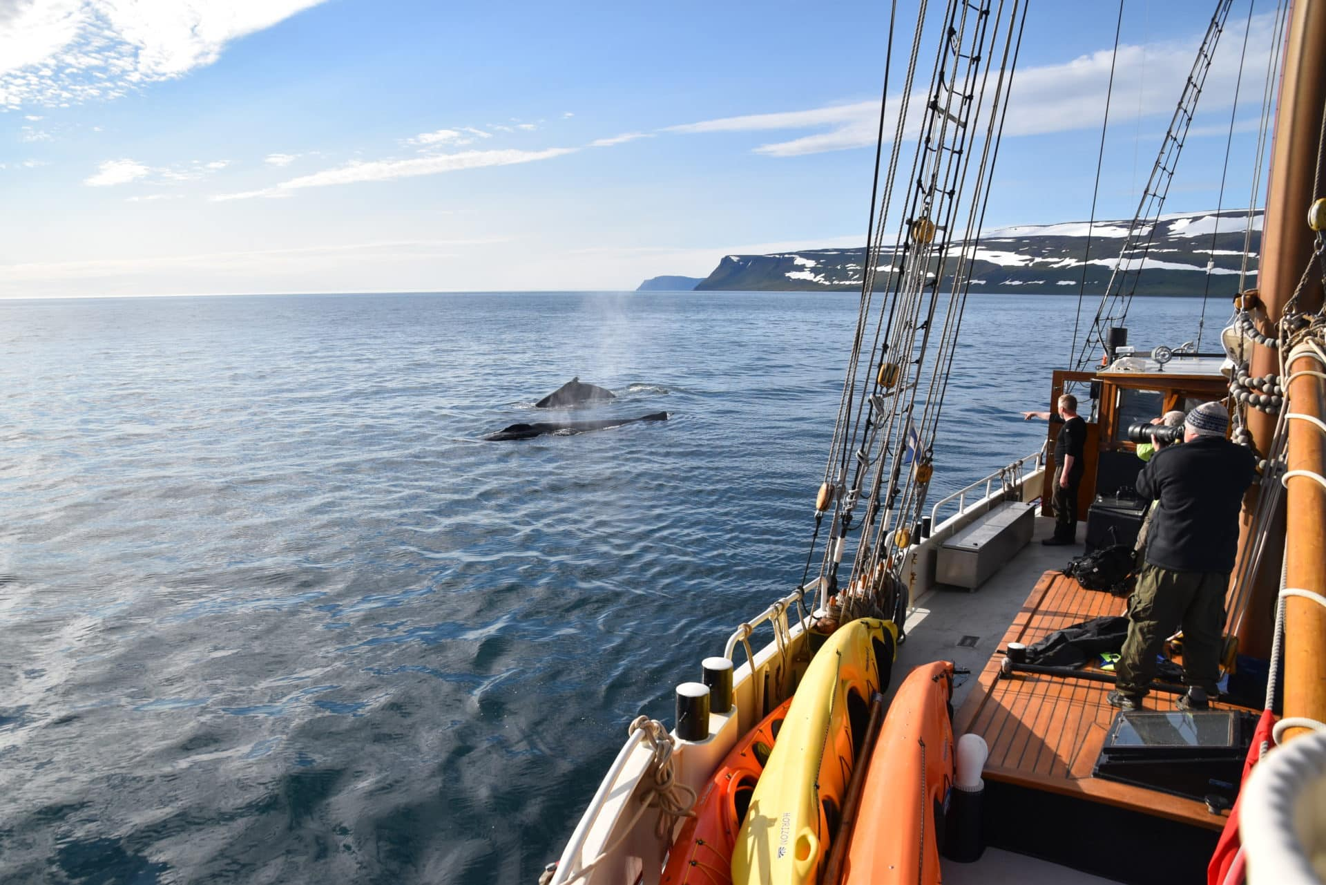 7-day sail and hike tour in Iceland