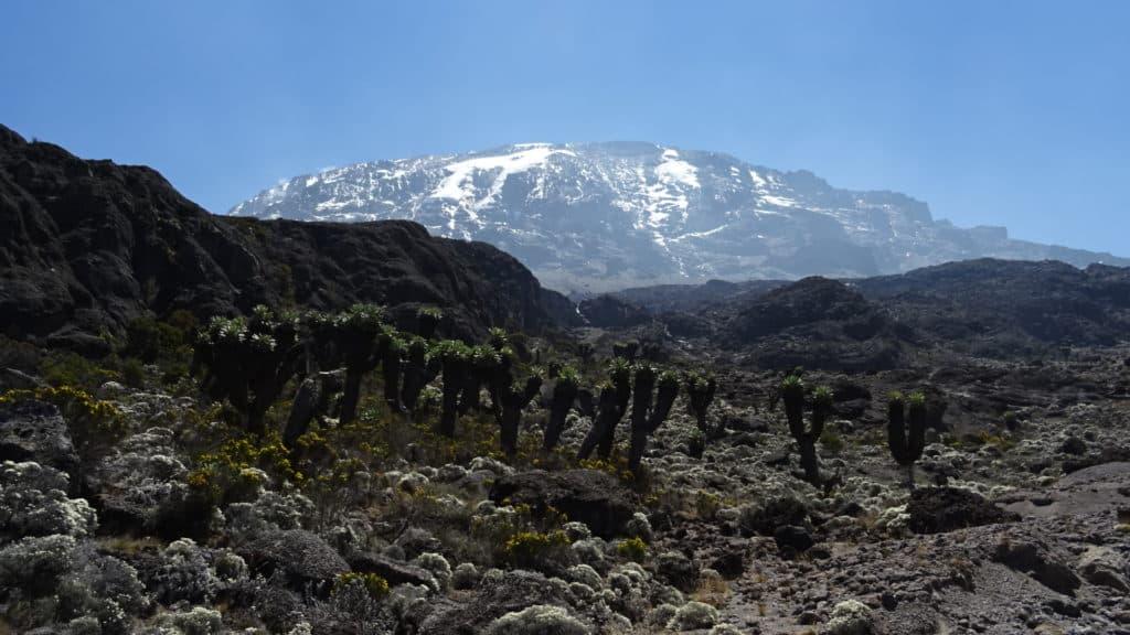 Kilimanjaro ascent