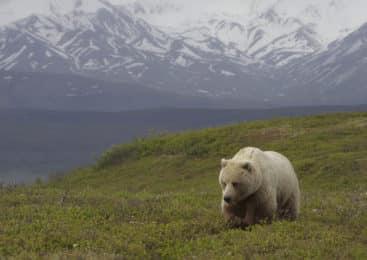 Explore Alaska-
