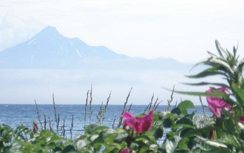 Rishiri 1-day flower tour and hike, Hokkaido