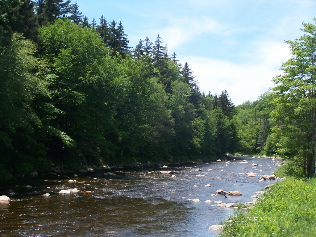 1-day Deerfield River Rafting in Fife Brook section