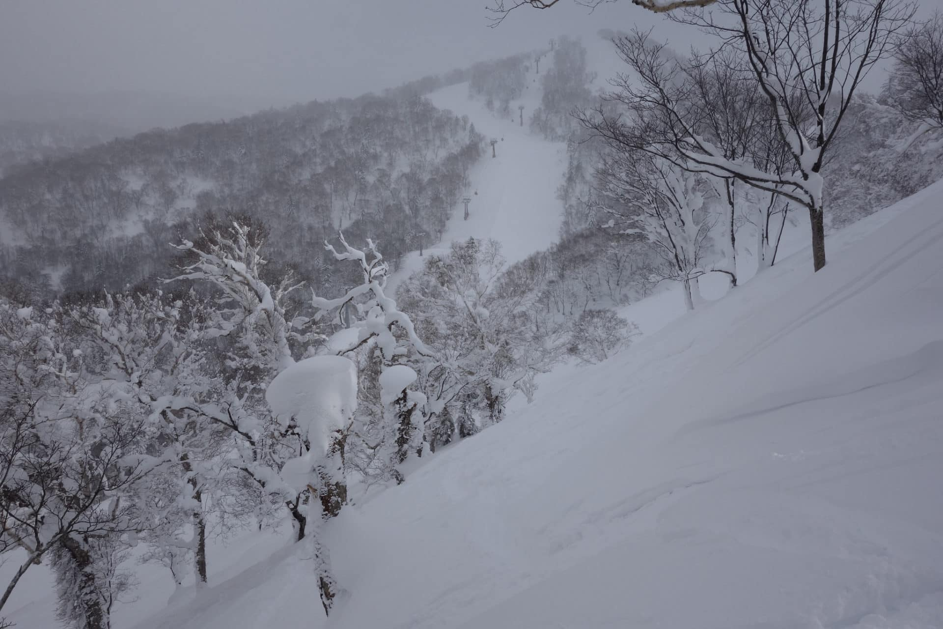 4-Day Guided Catskiing Tour in Shimamaki, Japan