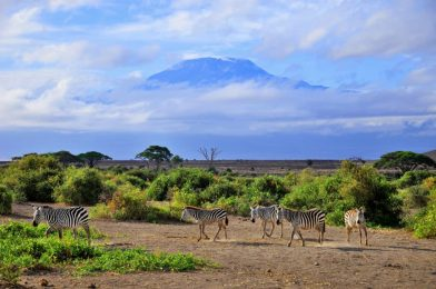 Mount Kilimanjaro ascent: Facts & Information. Routes, Climate, Difficulty, Equipment, Cost