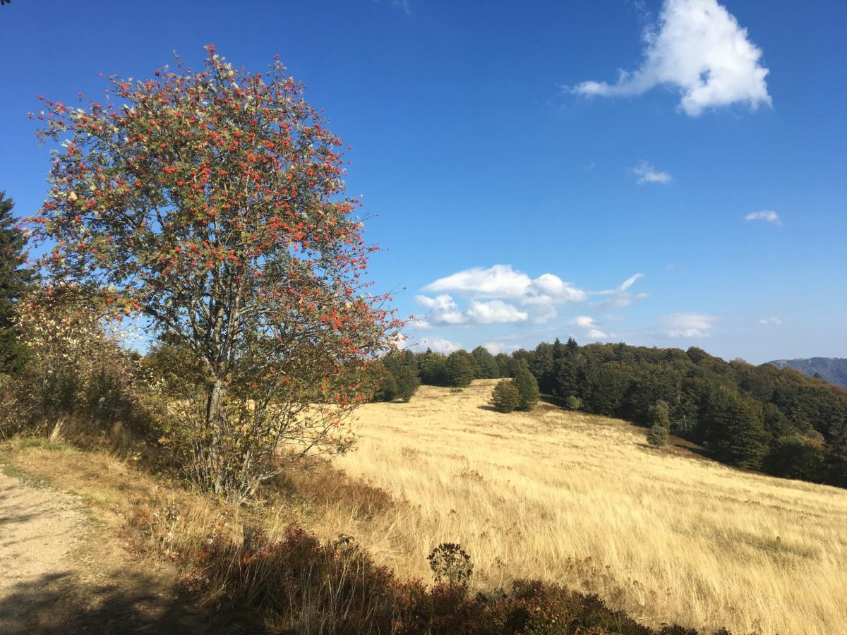 Hiking in Les Vosges: a beginner's experience very close to home